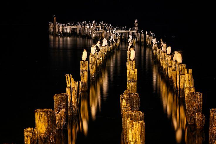 Muelle Puerto Natales. Chile