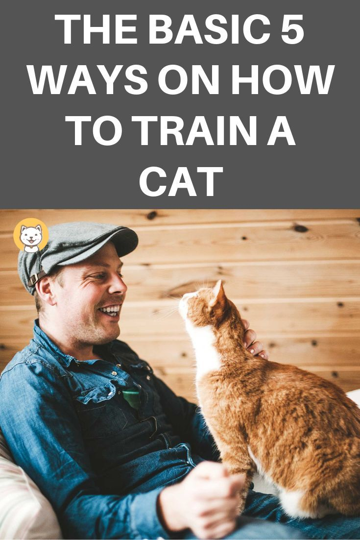 The Basic 5 Ways On How To Train A Cat Cat Training Cat Care