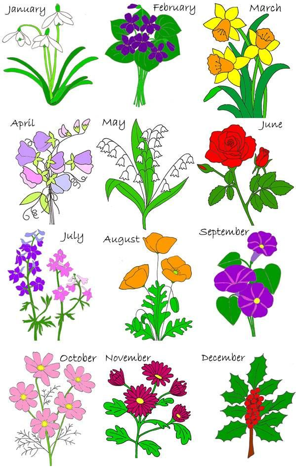Birth Month Flowers Combined: Birth Stones, Flowers