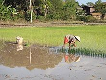 About 80% of Laos population practices subsistence agriculture.