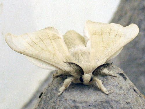 Tiny Moths  Google Search  Bizarre  Pinterest  Moth And Animal Best Small Moths In Bathroom Inspiration