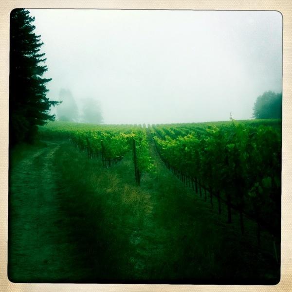 vineyard (my current desktop wallpaper)