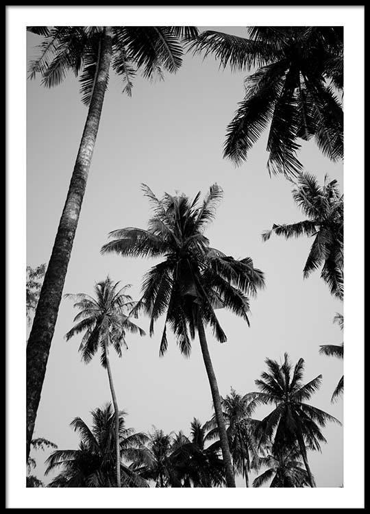 Palms above Poster in der Gruppe Poster / Größen und Formate / 50x70cm bei Desenio AB (8964)