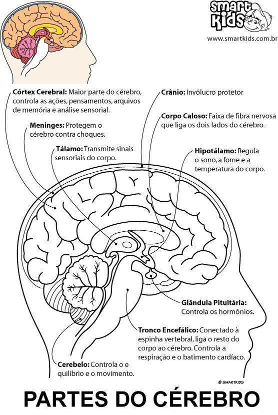 Colorir Desenho Partes do Cérebro