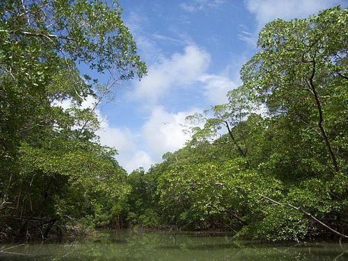 Región Amazónica (Colombia) - Wikipedia, la enciclopedia libre
