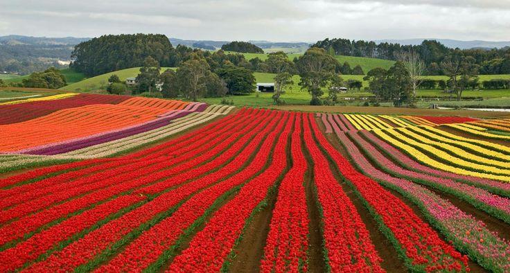 Flowerdale, Tasmania