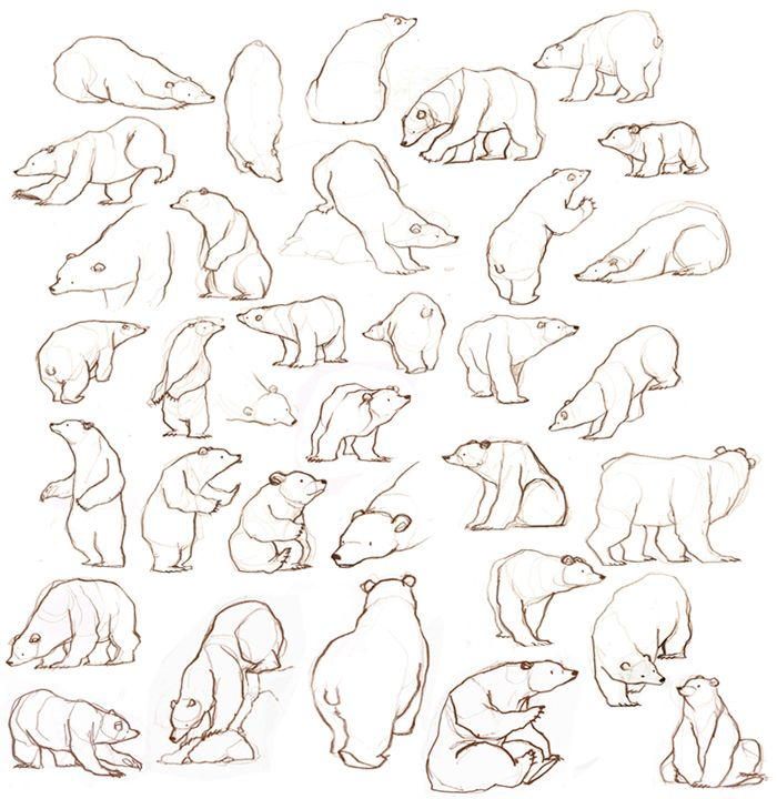 Bear Sketches - Bear Movement; Behavior. For that Norwegian Folktale Retelling I'm kicking around.