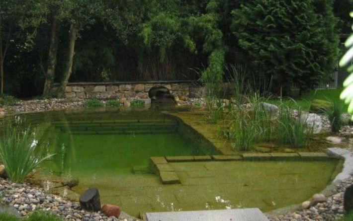 51 best images about natural swimming pools on pinterest for Garden pool facebook