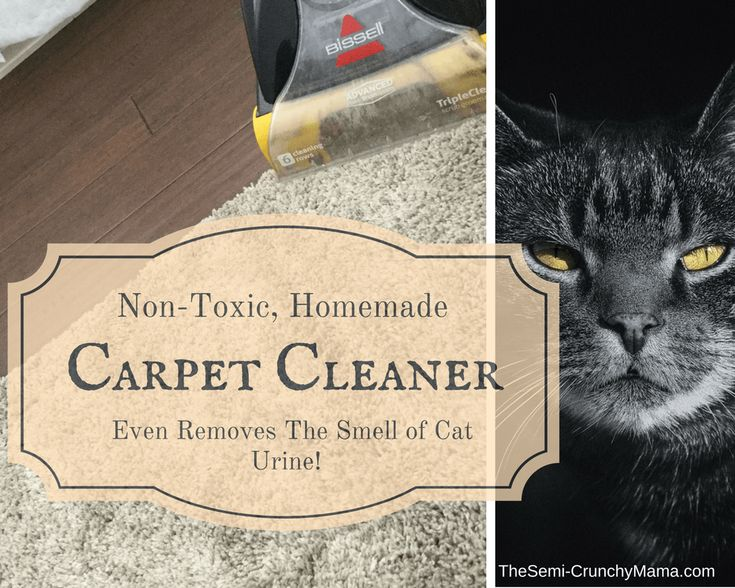 Best 20 Cat Urine Smells Ideas On Pinterest Dog Urine