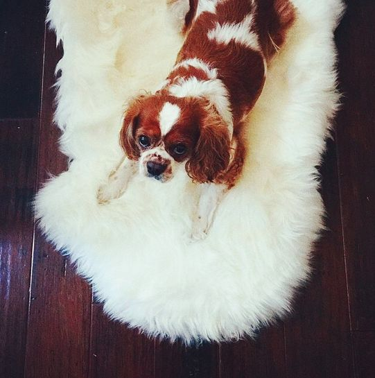Dog Looks Like A Rug: 99 Best #PBPet Images On Pinterest