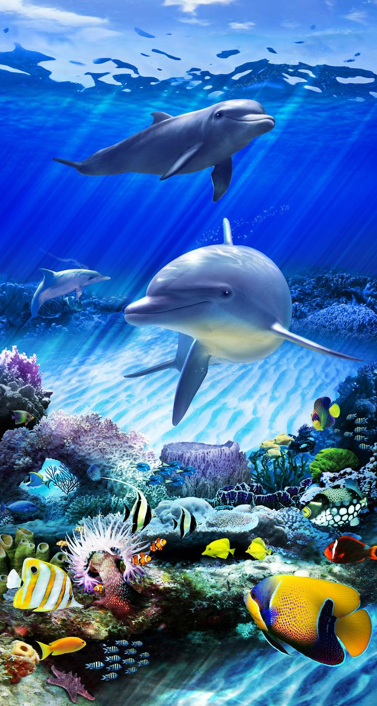 Dolphin Reef Static-Cling Film for Glass Doors & Windows, by Wallpaper For Windows...Coming Soon!