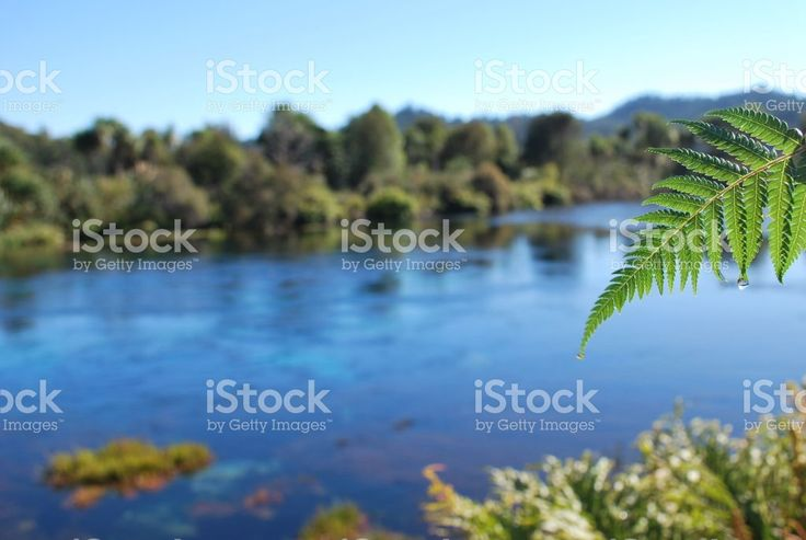 Fresh Pure Spring Water Bubbling Up Out Of Ground royalty-free stock photo