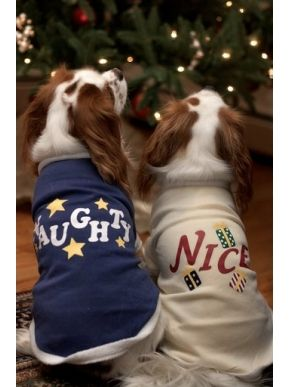 Aww Cute Cavalier King Charles Spaniels in Christmas outfits