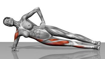 Side plank muscles diagram -- This shows the muscles involved in ...