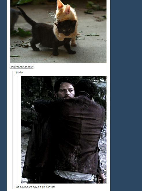 Supernatural really DOES have a gif for everything ... and I literally LOLed until I cried.: Supernatural Cat, Supernatural Fandom, Hug Kitty, Dean O'Gorman, Dean And Cas, Definitions Proof, Spn, Community Posts, Gif