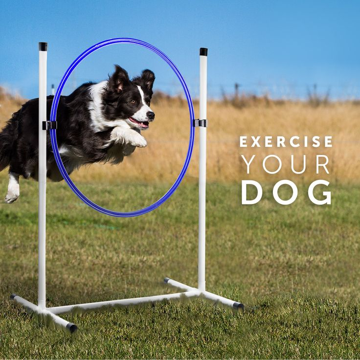Backyard Dog agility training is a great way to tire your ...
