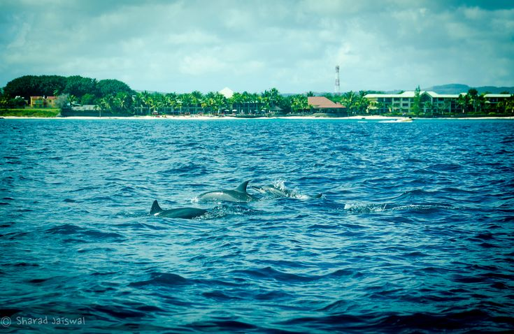 Dolphin watching near Balaclava Fort, Mauritius