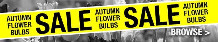 CLEARANCE Bulbs   Marshalls Seeds
