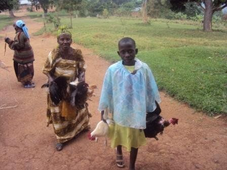 Hullo friends ,its now or never please support now - Hens & Cocks for 100 orphans in Buwunga sub county