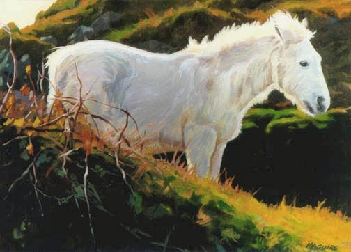 Connemara Pony by Barrie Maguire on ArtClick.ie