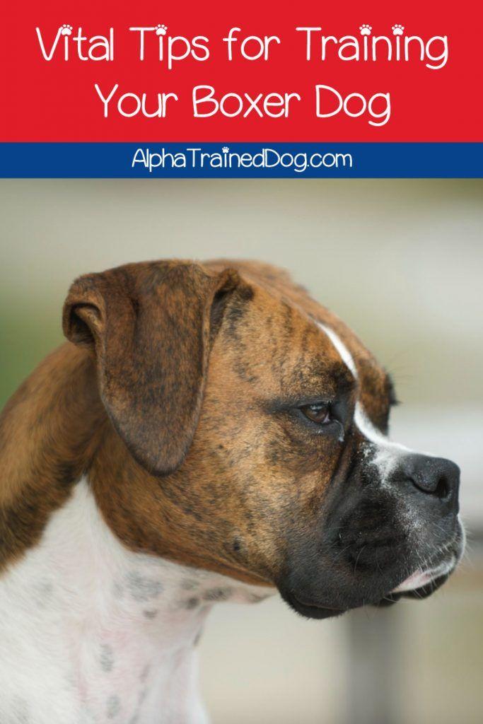 Boxer Dog Training Tips Boxer Dogs Dog Training Boxer Dogs Training
