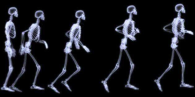 CURIOSIDADES SOBRE LOS HUESOS  Los bebés suelen tener más huesos, pero durante el crecimiento, algunos de ellos se fusionan y se convierten en uno solo, por lo cual, en la edad adulta en verdad tenemos solo 206. El cráneo, el sacro, y los huesos de la cadera son algunos de los que se fusionan.  ►La mano tiene 27 huesos, el pie 26 y la cara 14. ►El fémur es el más largo y mide aprox. 1/4 de tu altura. ►El más pequeño es el estribo, que se encuentra en el oído. ►El hueso que más se rompe es la…