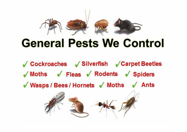 My Home Pest control are 24×7 available at your services.  You can book your services online or can request to get a free quote.