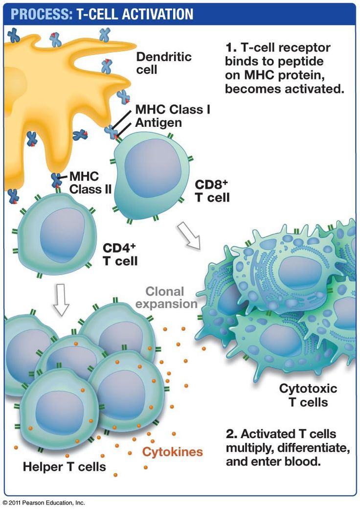 Biology Pictures: T cell