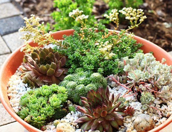 Arrangements de plantes grasses : une tendance populaire et… juteuse