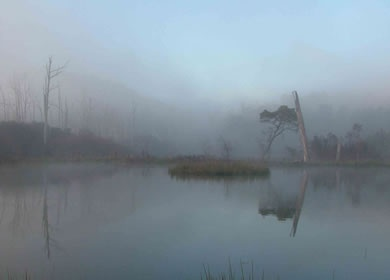 Foggy morning over the wetlands  www.41southtasmania.com