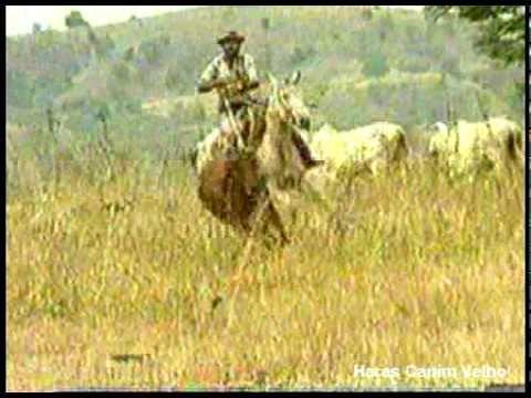 Hino do Mangalarga Marchador -- Haras Capim Velho - YouTube