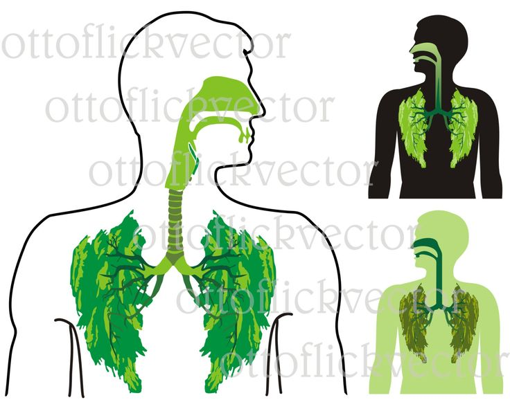 GREEN LUNG CLIPART, anatomy, human organ, medical, environmental, pollution metaphor eps, ai, cdr, png, jpg, healthy lifestyle by ottoflickvector on Etsy