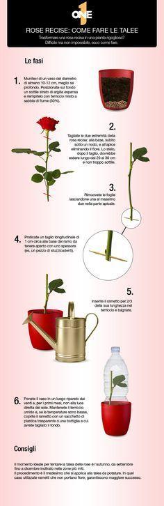 Oltre 25 Fantastiche Idee Su Giardino In Contenitore Su