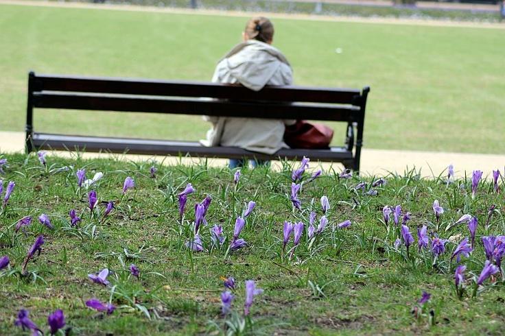 Wiosna na Jasnych Błoniach