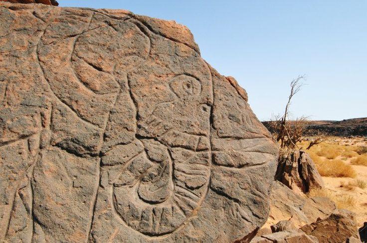 Engraved elephant, Messak Settafet, Libya.  © David Coulson/TARA