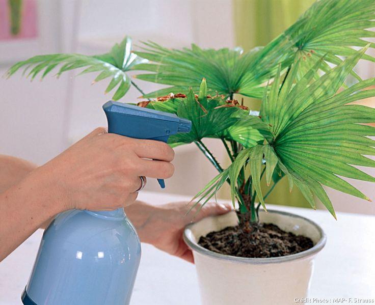Plantes d'intérieur brumisation