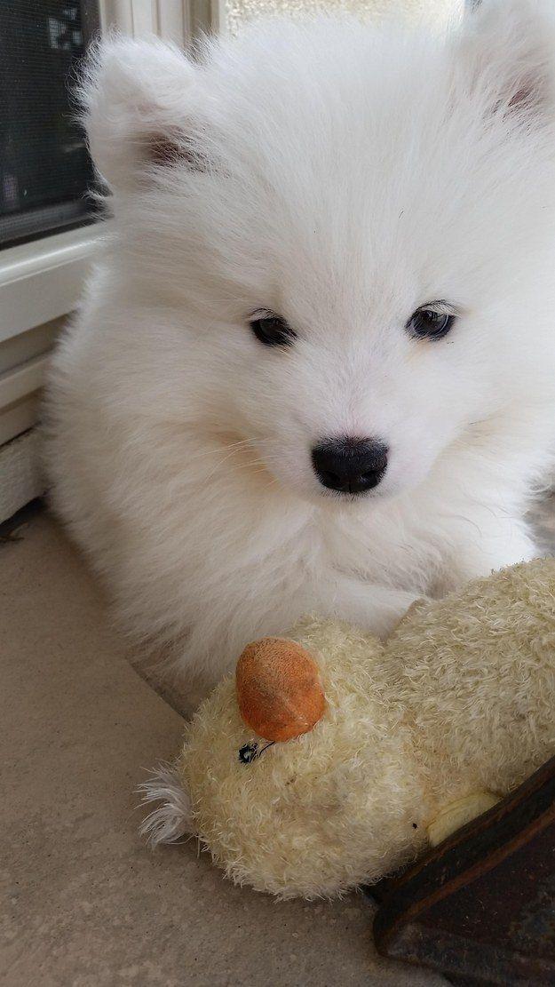 крошечные щенки