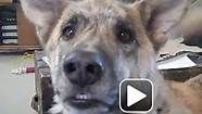 you tube dog bacon - Bing Videos