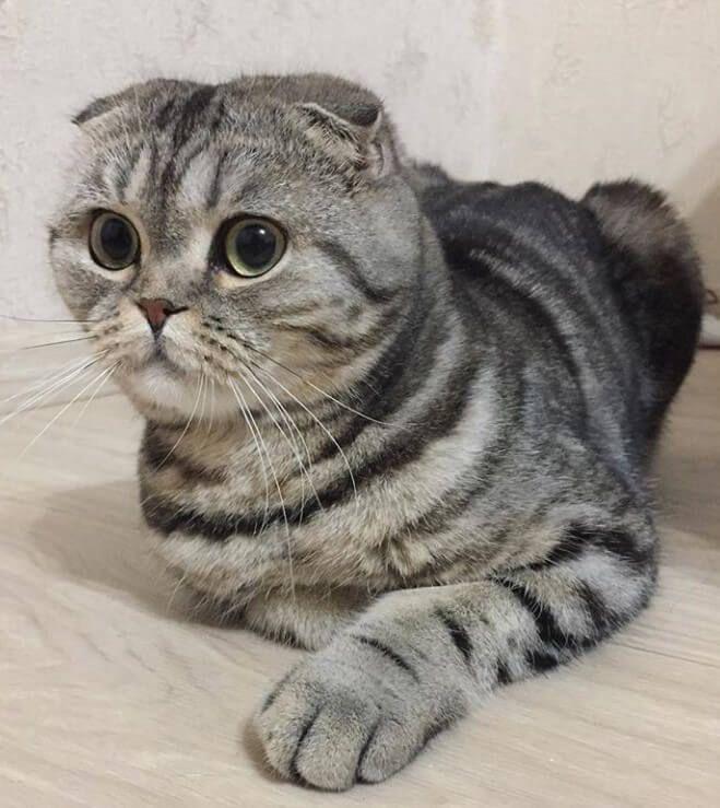 260 Famous Male Cat Names Cat Names Cats Boy Cat Names
