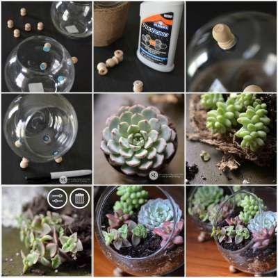 17 mejores im genes sobre plantas jardines en pinterest - Decoracion para terrarios ...