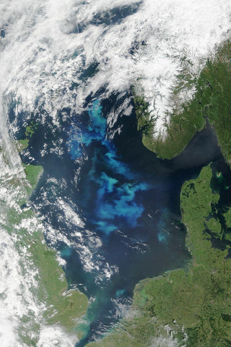 """Kommen die Killer-Algen zurück? Stephan Lutter STEPHAN LUTTER  21. JULI 2015 Blaualgenblüte in der Ostsee © Dariusz Bogdal, WWF Polen Blaualgenblüte in der Ostsee © Dariusz Bogdal, WWF Polen 1 2 3 4 In diesen Tagen lieferte die NASA Aufnahmen aus dem All, die eine riesige Algenblüte in der mittleren Nordsee zeigen. Ich fühlte mich sofort erinnert an den Sommer 1988, als ich gerade beim WWF angefangen hatte, und die so genannte """"Killeralge"""" Chrysochromulina mit ihrem Gift Fische und ganze…"""