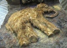 uitgestorven dieren door de mens - Google zoeken