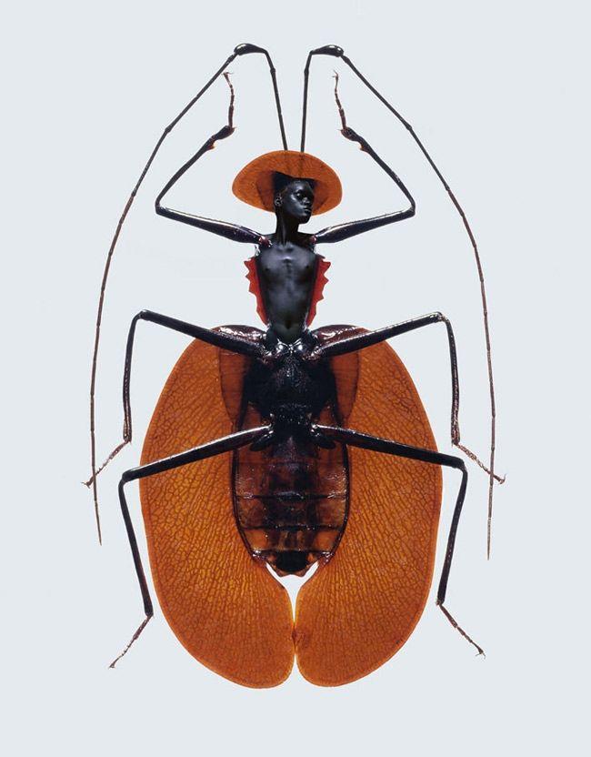 Laurent Seroussi Combines Beauties with Bugs (NSFW)