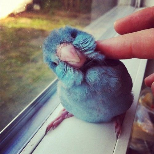 Hi little blue friend :D