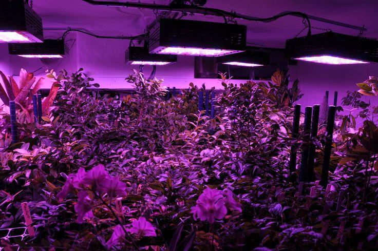 Las ventajas de la iluminación LED en los invernaderos | Monsanto Chile