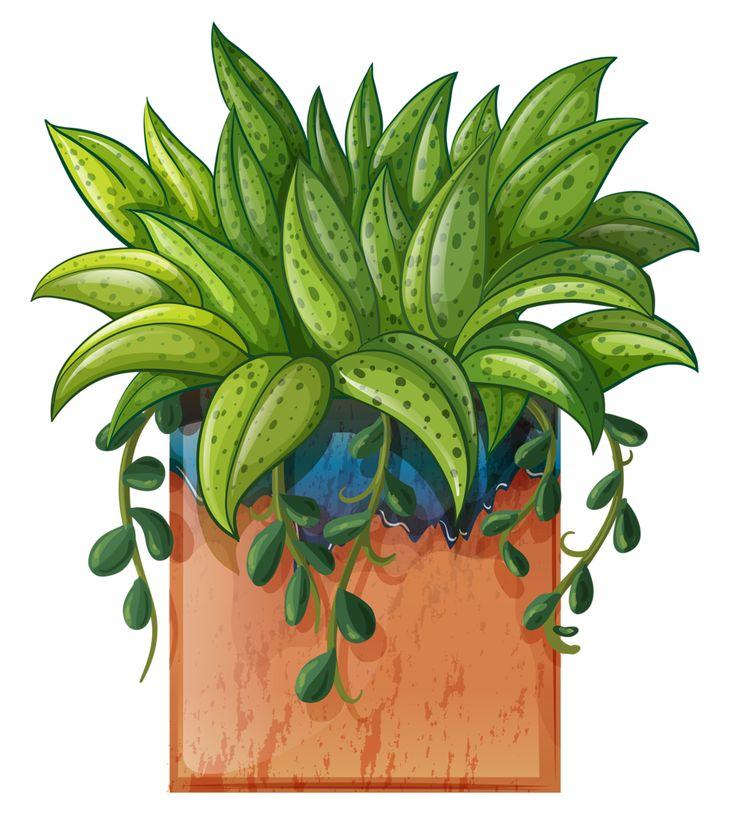 Les 450 meilleures images du tableau jardinerie sur for Jardinerie plantes
