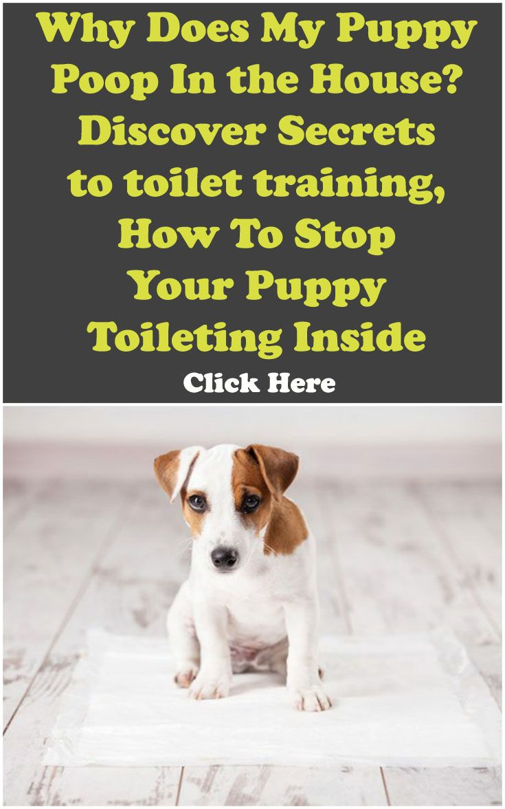 Why Does My Puppy Poop In the House? discover Secrets to toilet training, How To Stop Your Puppy Toileting Inside
