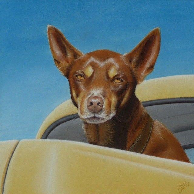 """GUARDING THE UTE"" Gotta love a dog dedicated to his job!! I didn't dare touch the gorgeous old #FX ute he was guarding! #nawden #triplesartists #topworkofart #BESTDM #theartlovers #world_art_sharing #pastel #drawing #rural_love #artistmafia #artfido #artcollective #fineart #artist_community #australialovesyou #reddog #kelpie #dogs #australian #holdenfx #ute #farmlife #lifeonthefarm #deviantart"