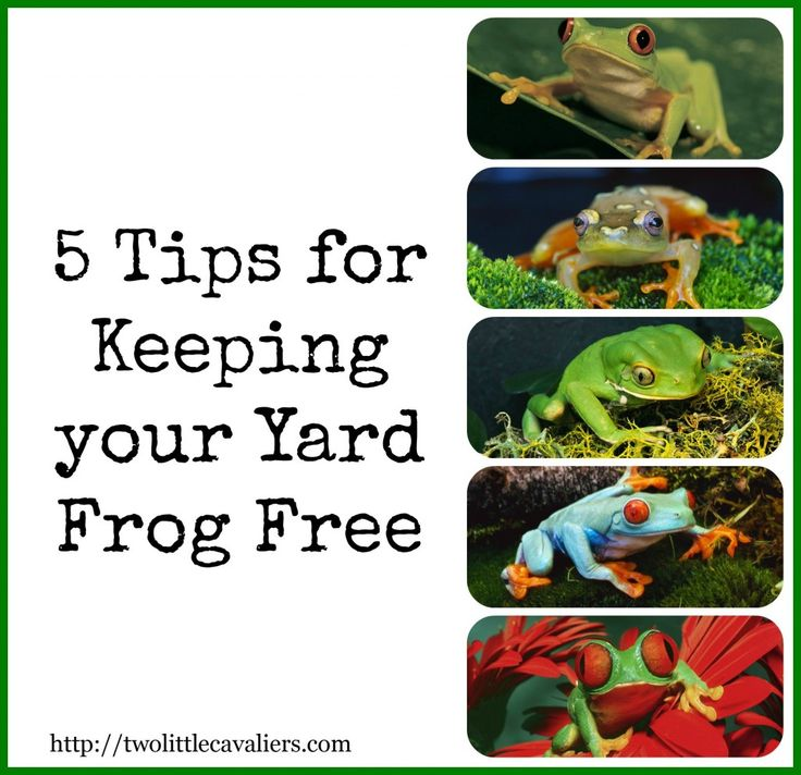 5 tips for keeping your yard frog free frog repellent