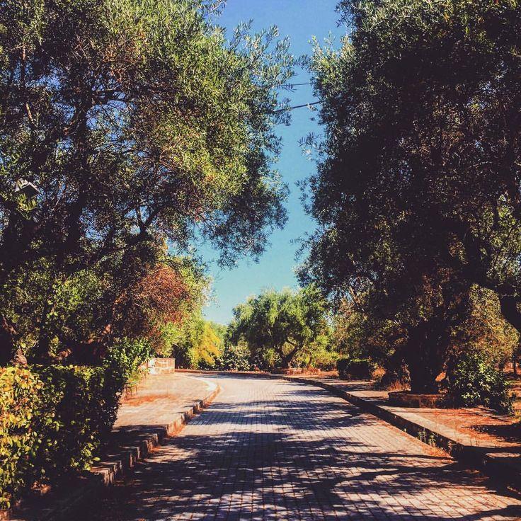 """""""Mi piace"""": 68, commenti: 1 - Ioana Fmlyhm (@ioanafmlyhm) su Instagram: """"Fior di Levante days #latergram . . . . . . . . #zante #zante2017 #zakynthos #visitzante…"""""""